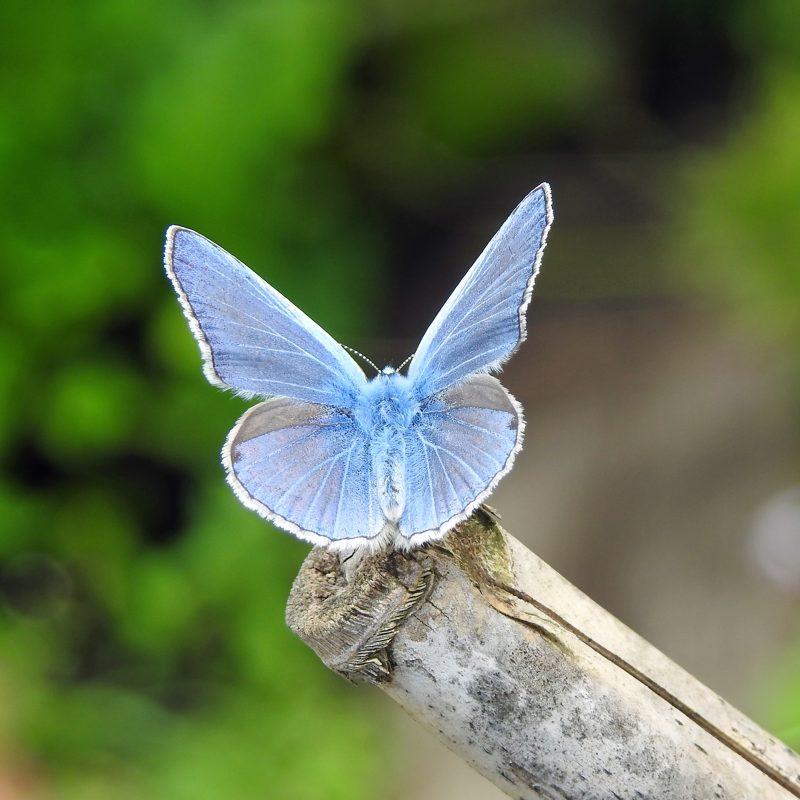 mooi blauw