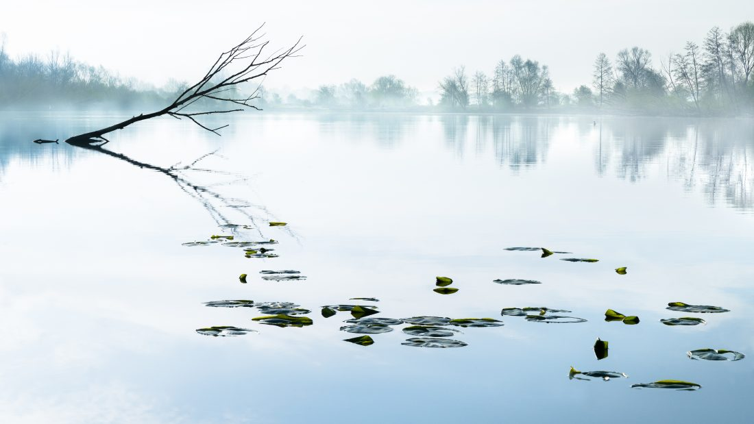 Sereen waterlandschap