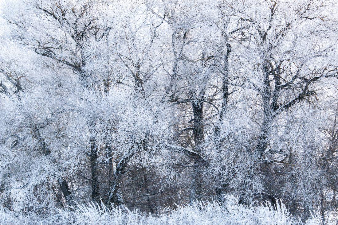In winter dress